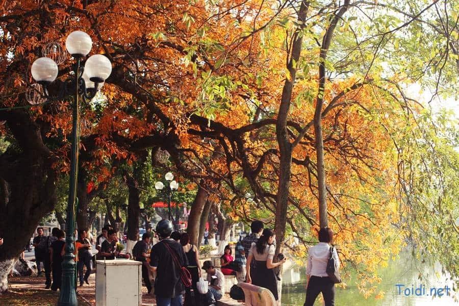 Hà Nội mùa thu, cây hoa Lộc Vừng chuyển lá.