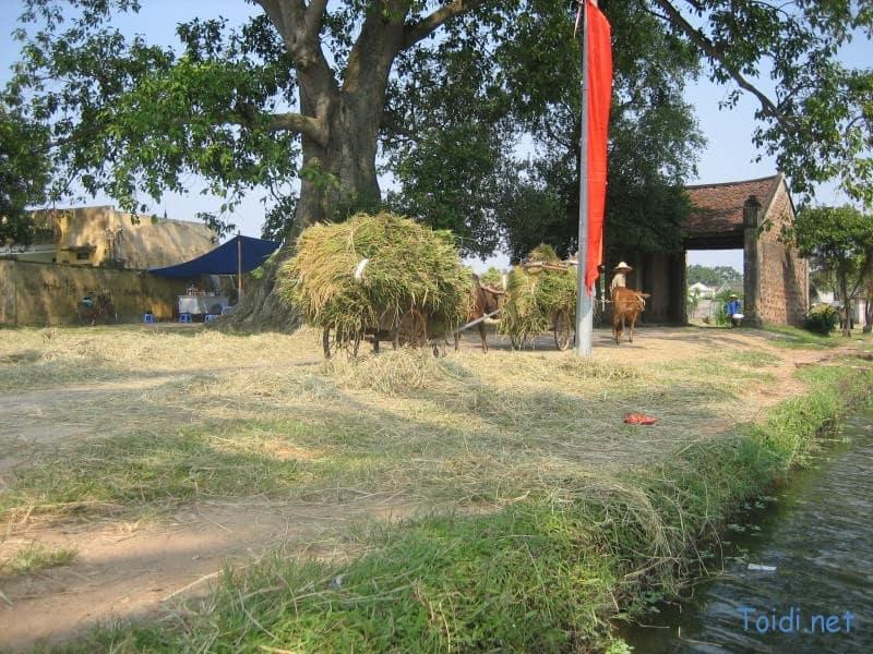 IMG 4981 Du lịch Làng cổ Đường Lâm