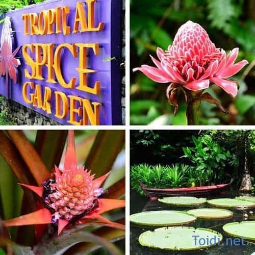 tropicalspicegarden du lich malaysia