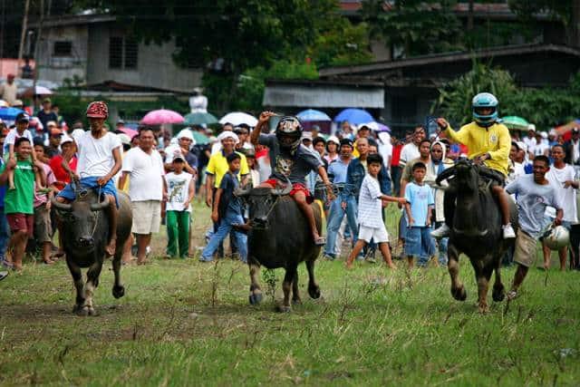 le hoi dua trau o philippines Phương tiện đi lại ở Philippines