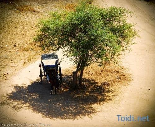 Thue xe ngua o Bagan