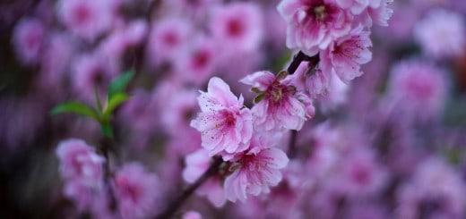 Điểm chụp ảnh hoa đẹp ở Hà Nội