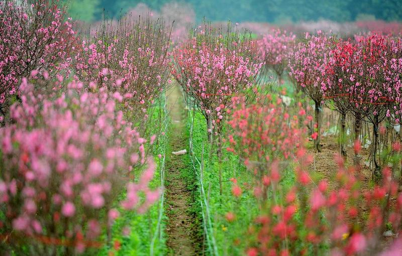 Địa điểm chụp ảnh hoa đẹp ở Hà Nội