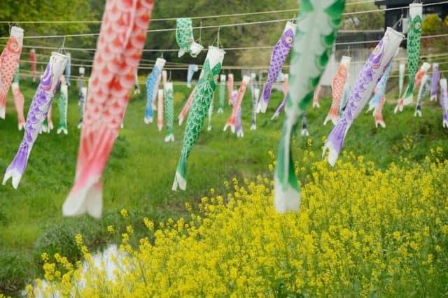 kodomonohi-lễ-hội-cờ-cá-chép