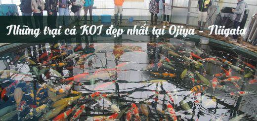 trại cá vùng Ojiya Nhật Bản