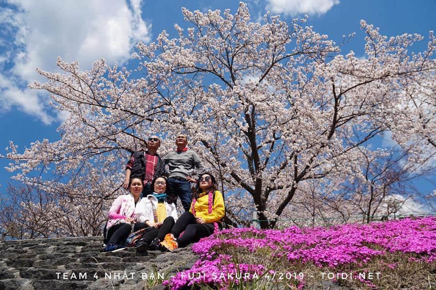 Team Hoa Anh Đào Nhật Bản 31/3/2020