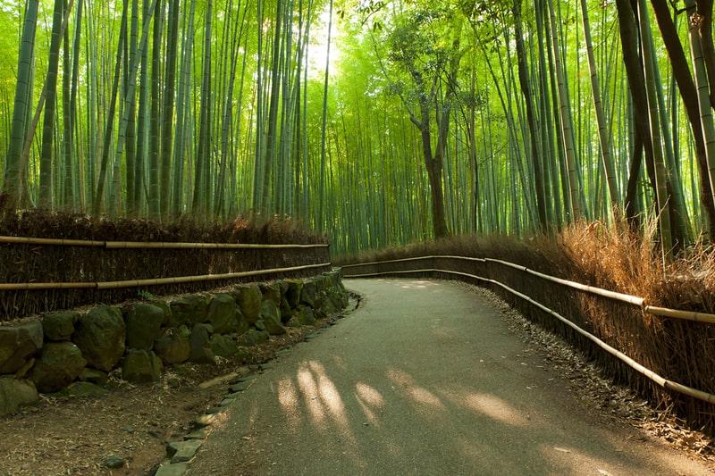 Arashiyama Rừng Trúc Đẹp Như Phim Kiếm Hiệp ở  Kyoto, Nhật Bản