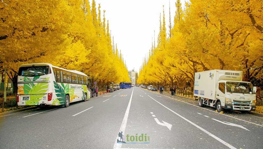 Top 5 Địa điểm Ngắm Trọn Vẹn – Mùa Thu Nhật Bản