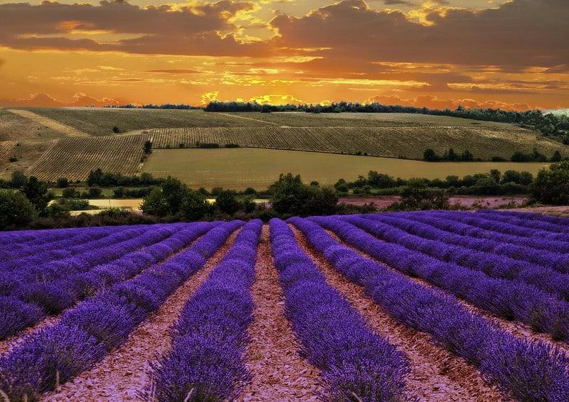 Du Lịch Provence Pháp – Cánh Đồng hoa Oải Hương